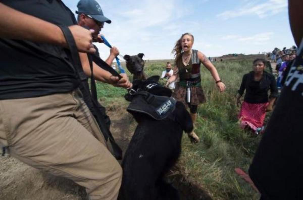 Dakota Access security brought attack dogs to hold off people protecting burial sites where company was plowing Saturday.