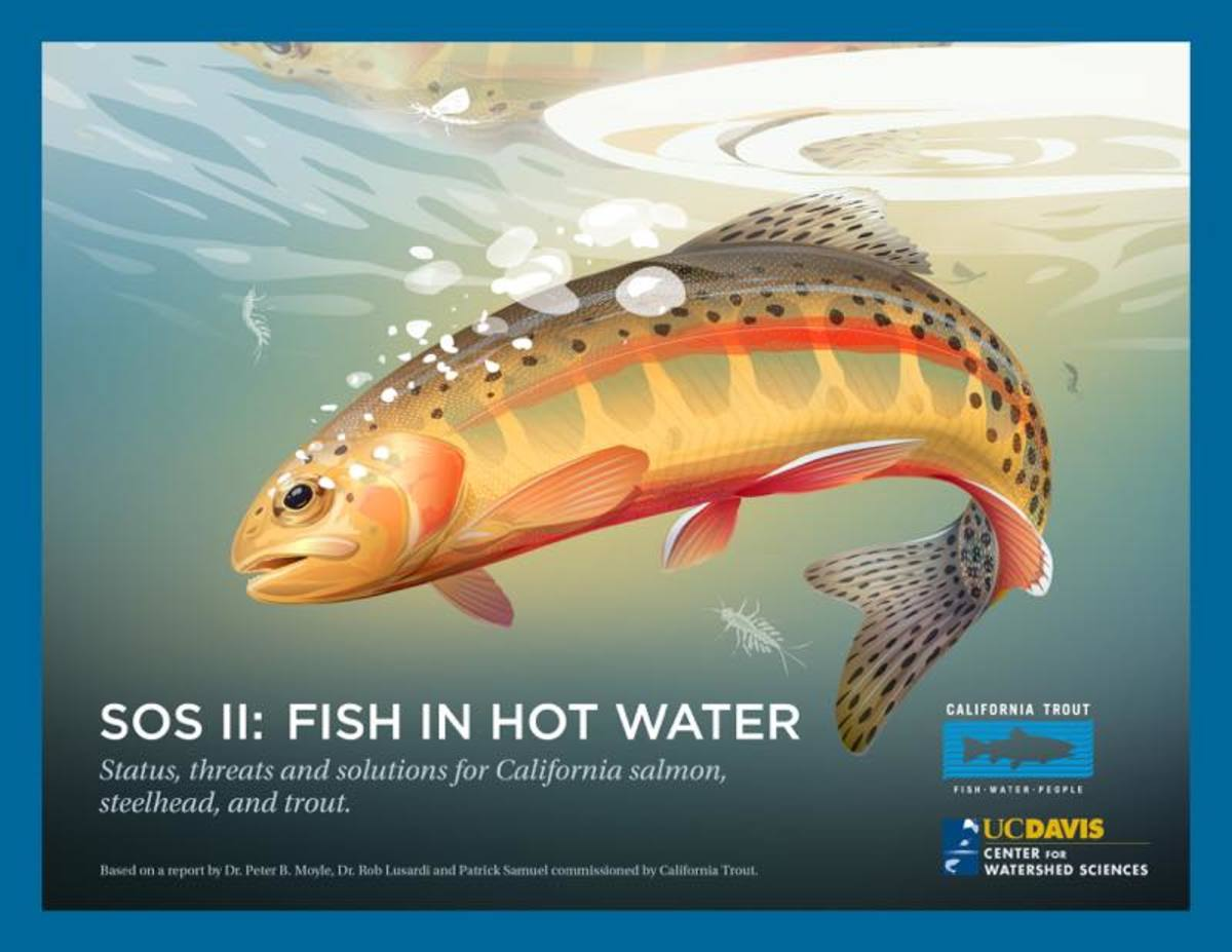 Cover for new report, State of the Salmonids II: Fish in Hot Water, from the UC Davis Center for Watershed Sciences and CalTrout.