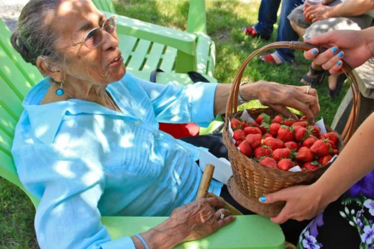 Strawberries are a significant part of many tribal nations. In this photo, Eleanor Spears Dove, Narragansett elder, sampled a strawberry from a basket passed at the Narragansett Strawberry Thanksgiving.