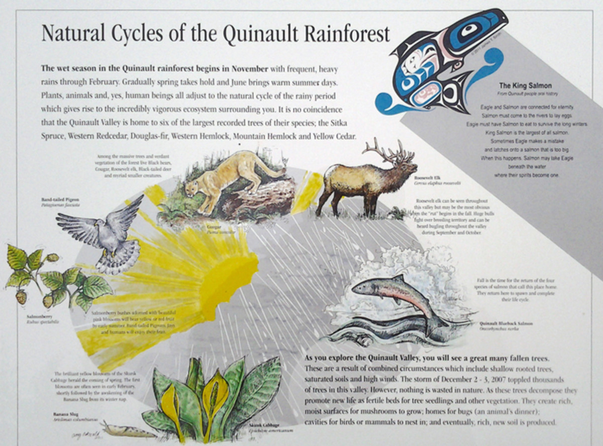 Natural Cycles of the Quinault Rainforest at Quinault Nation