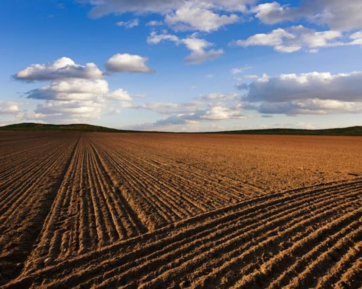 Soil, the building block of life, is being decimated around the world, and may not last.