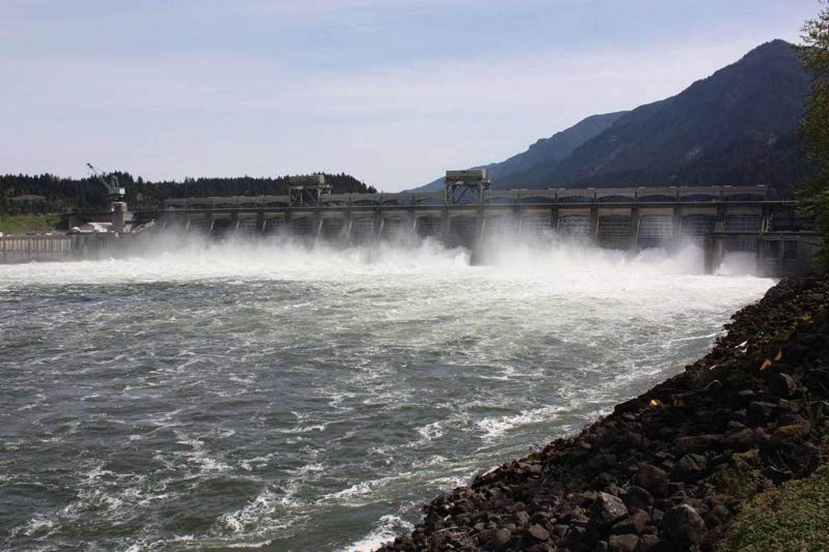The Bonneville Dam on the Columbia River, where sea lions feast on endangered salmon.