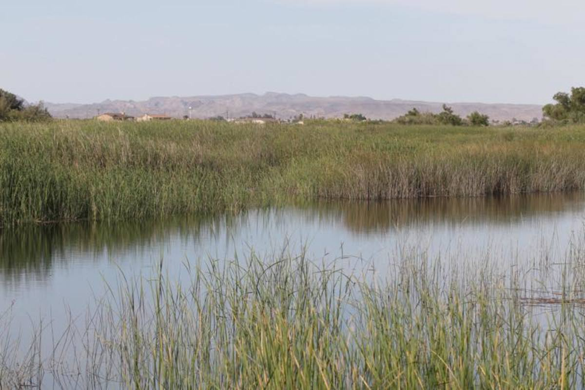 The Colorado River Indian Tribes manage more than 15,000 acres of alfalfa, cotton, duram wheat and other crops. They rely on the water for Arizona and California tribal lands.