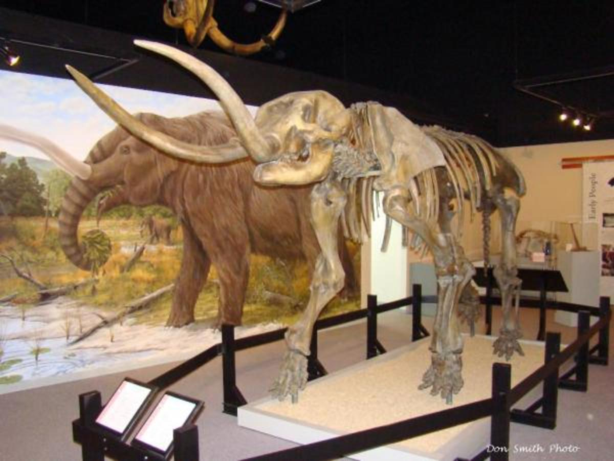 An exhibit at the Museum of the Middle Appalachians