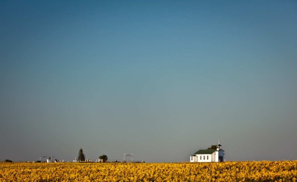 St. Basil's Church (known locally as the Mossman church) with sunflowers.