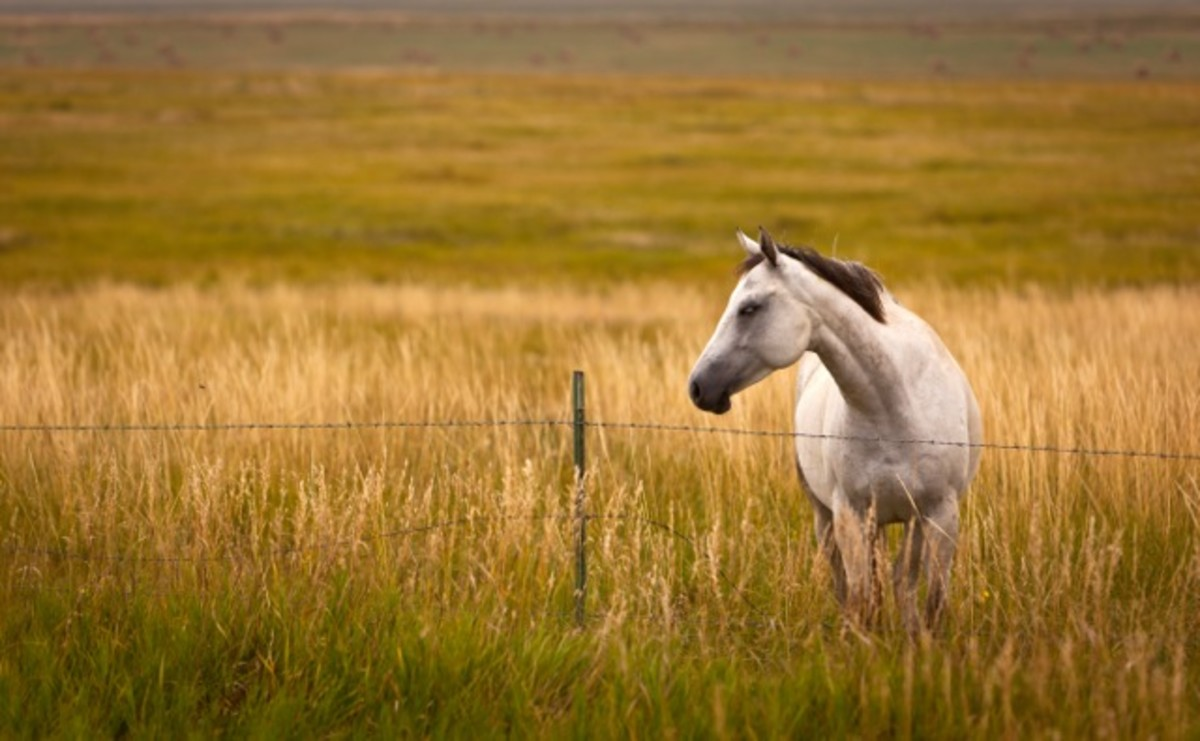 Horse on country road near Lake Oahe.