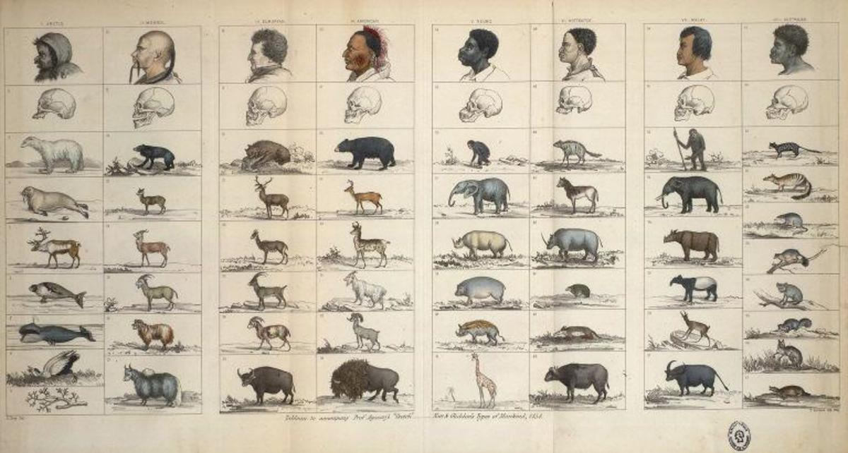Louis Agassiz's table of human species, from Nott and Gliddon, Types of Mankind, 1854.