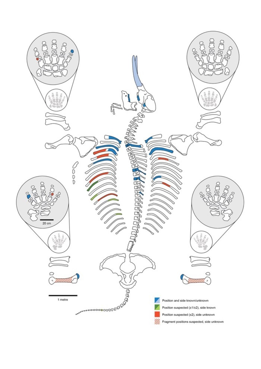 Humans, 130,000 years, Mastodon skeleton schematic showing which bones and teeth of the animal were found at the site.