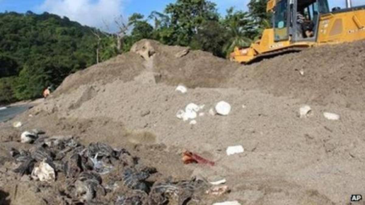Leatherback turtle hatchlings and 20,000 eggs were destroyed by errant bulldozers trying to curb erosion