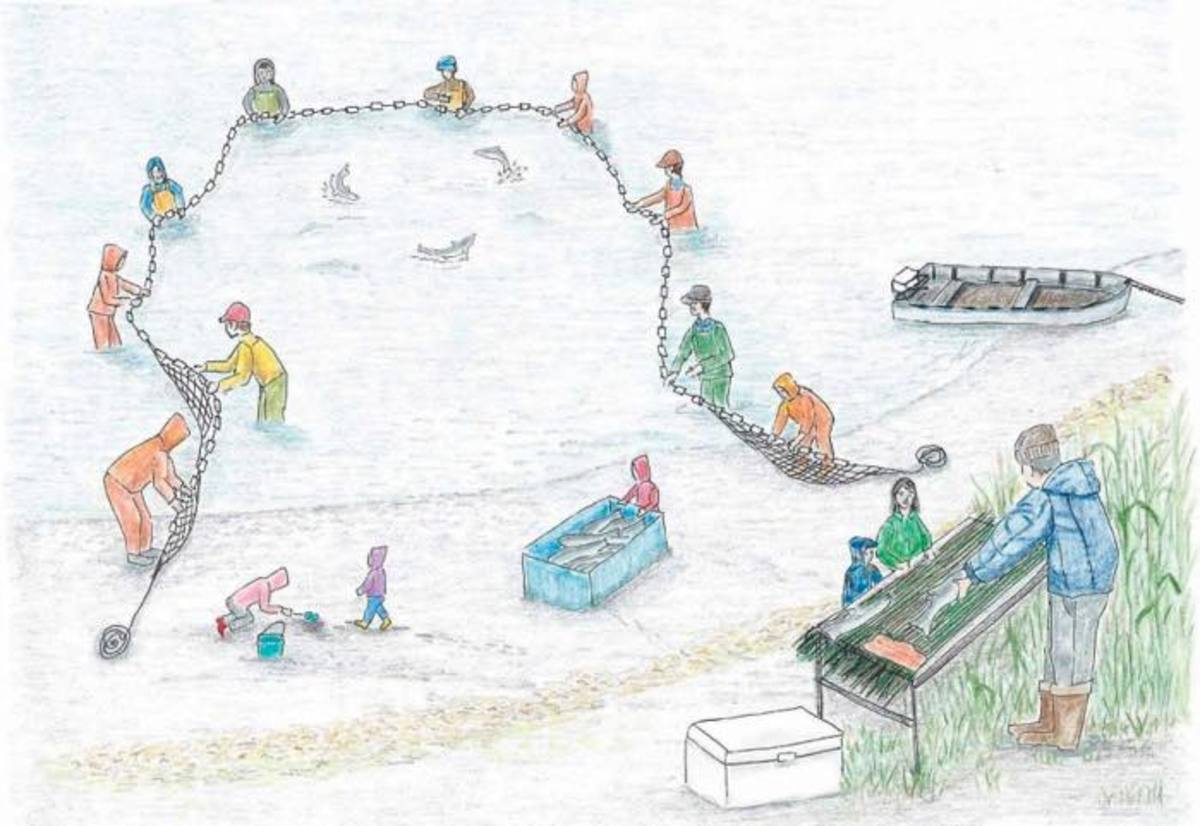 This illustration by Sharon Kay shows the salmon harvest.