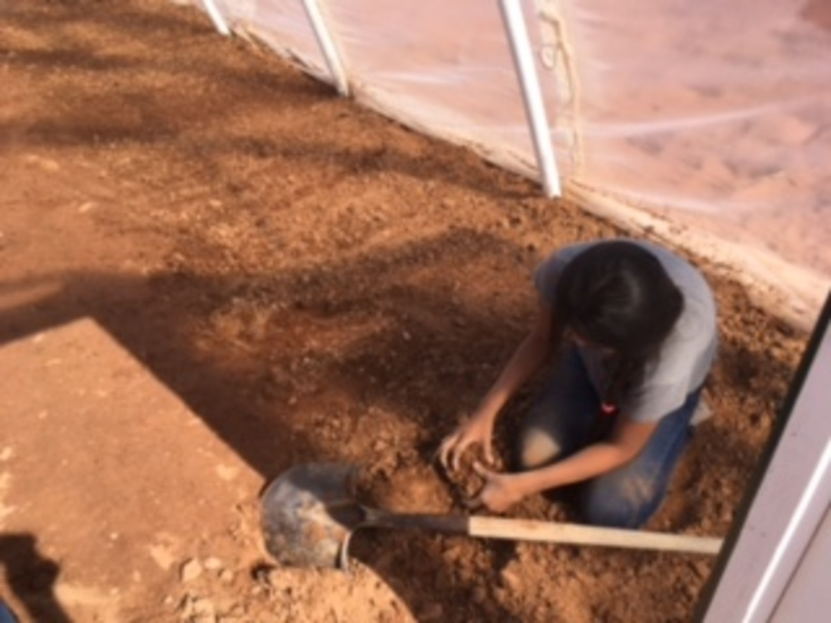 A beginning farmer in the hoop house discovers it takes hard work to produce a crop.