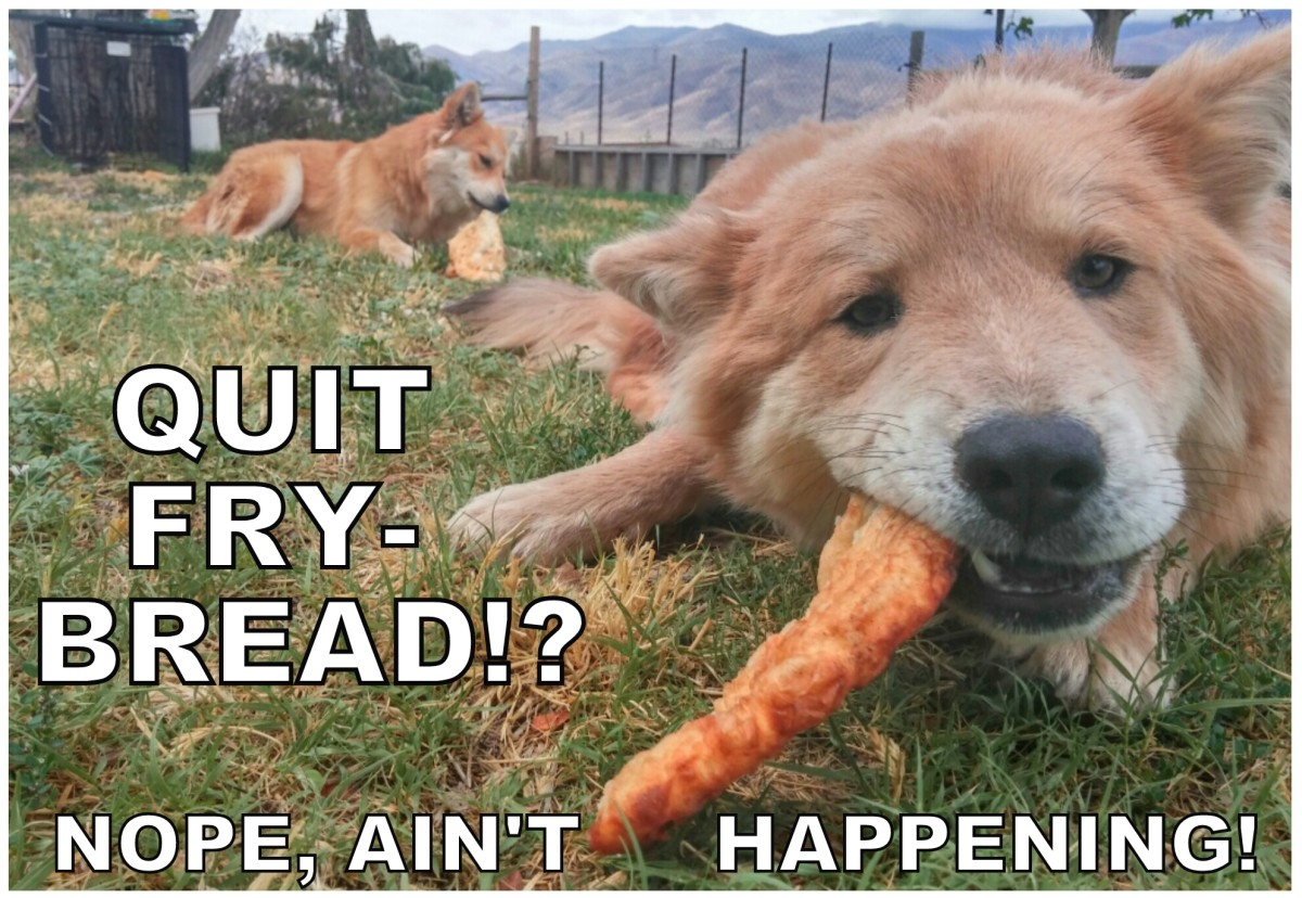 Even Fry Bread Eatin' Rez Pups Chaco and Denali wouldn't think of attempting this rezolution.