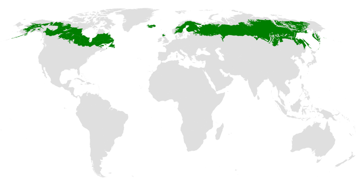 Pictured: Map of the world. Boreal forests stretch across the Northern Hemisphere from Alaska to Siberia.
