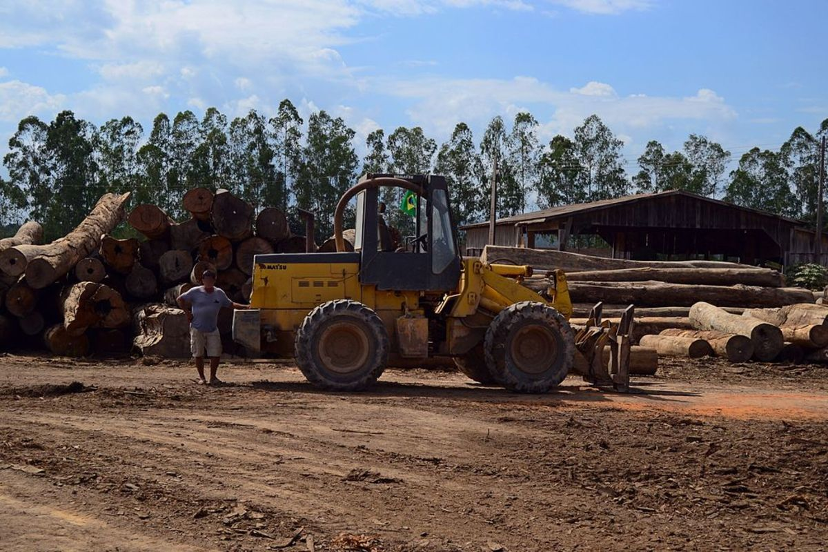 Pictured: Logging supervision in Novo Progresso, a municipality in the state of Pará in the Northern region of Brazil.
