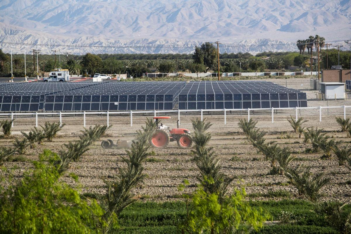 The Augustines in 2008 opened the first phase of its 3-megawatt solar farm, which helps power its 30,000-square foot casino. Rows of palms are part of the 33-acre organic farm the tribe is preparing to open in the coming months.  (Photo: Omar Ornelas/The Desert Sun)