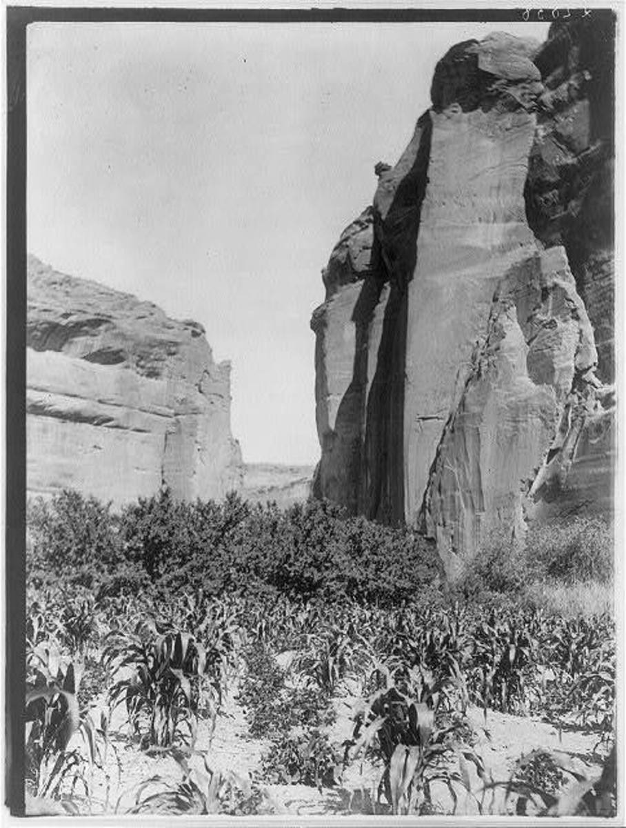 In this photo, circa 1906, patches of corn grow in a garden between canyon walls on the Navajo Nation. Traditionally, food in Indigenous communities was sourced directly from the land. This changed when the federal government relocated Native Americans to reservations and began commodities programs. (Photo courtesy of Library of Congress)