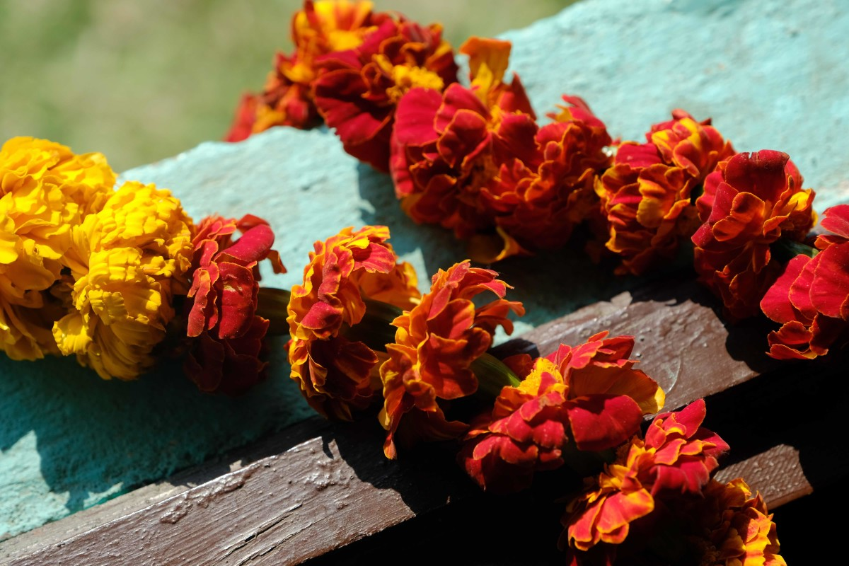 Visitors are greeted with the gift of a marigold Mala placed around the neck. (Photo by Mary Annette Pember)