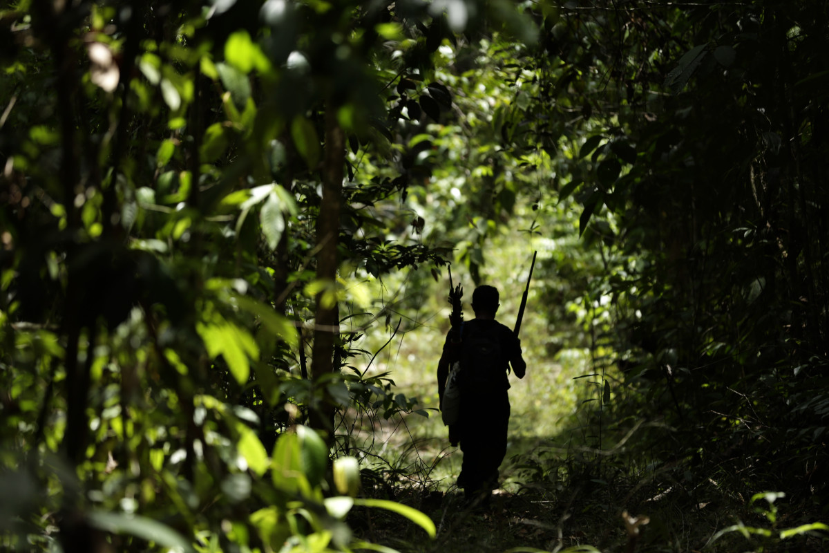 Tenetehara Indigenous man Regis Tufo Moreira Tembe patrols with the Ka'Azar, or Forest Owners, on the Alto Rio Guama reserve in Para state, near the city of Paragominas, Brazil, Tuesday, Sept. 8, 2020. Three Tenetehara Indigenous villages patrol to guard against illegal logging, gold mining, ranching, and farming on their lands, as increasing encroachment and lax government enforcement during COVID-19 have forced the tribe to take matters into their own hands. (AP Photo/Eraldo Peres)