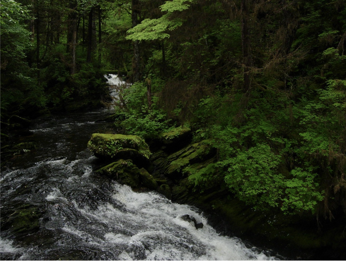 Tongass National Forest (Mark C. Brennan, Courtesy of Creative Commons)