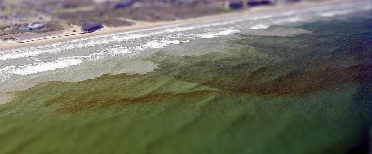 Red tide in Florida (Photo courtesy of NASA)