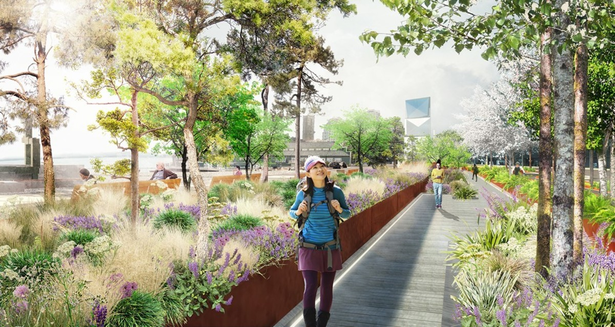 The downtown Seattle waterfront will feature a landscape of native plants that will filter stormwater before it reaches the bay. (Photo courtesy of Waterfront Seattle)