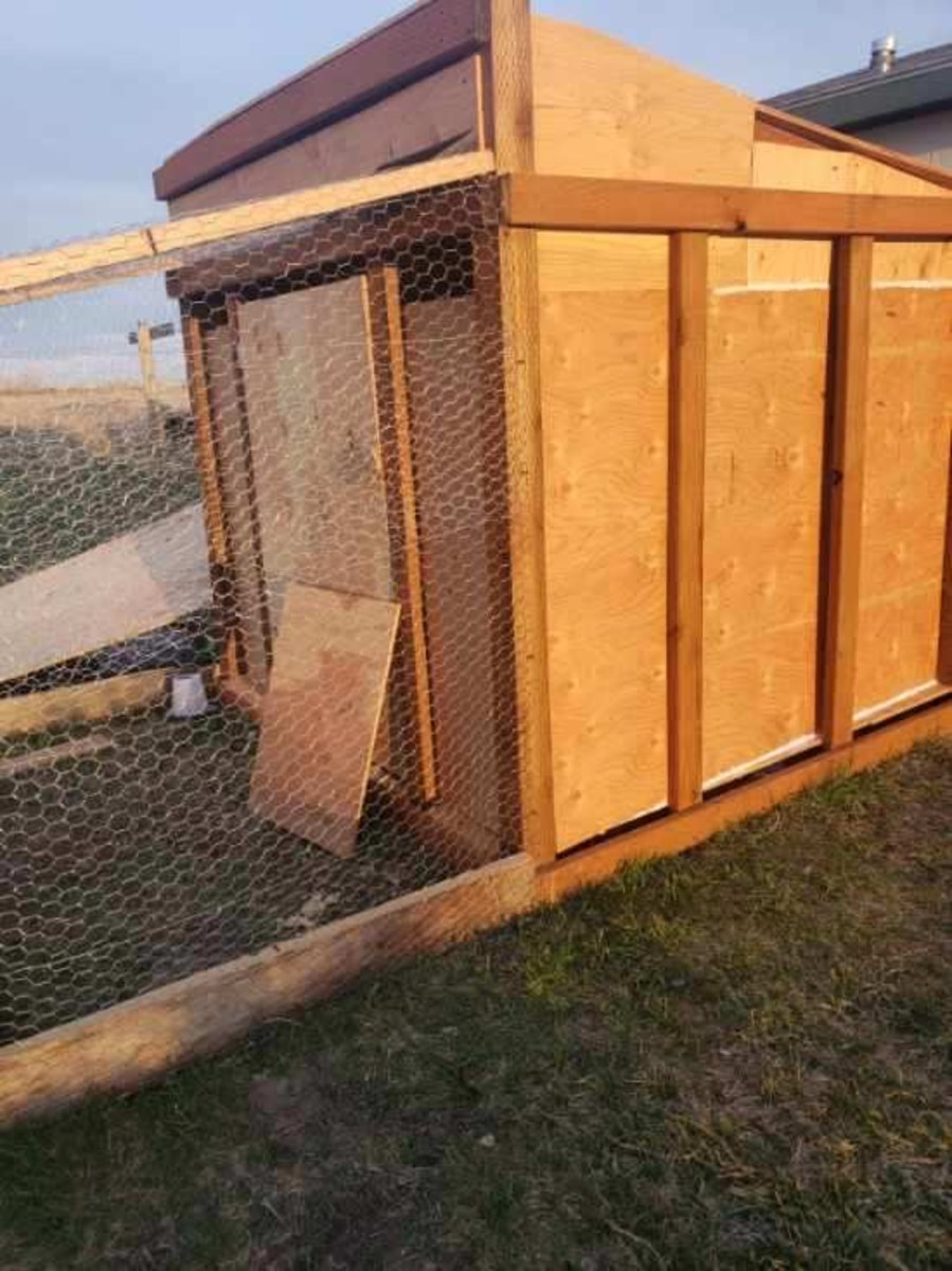 Chicken coop built by Diana Bigby (Photo by Diana Bigby)