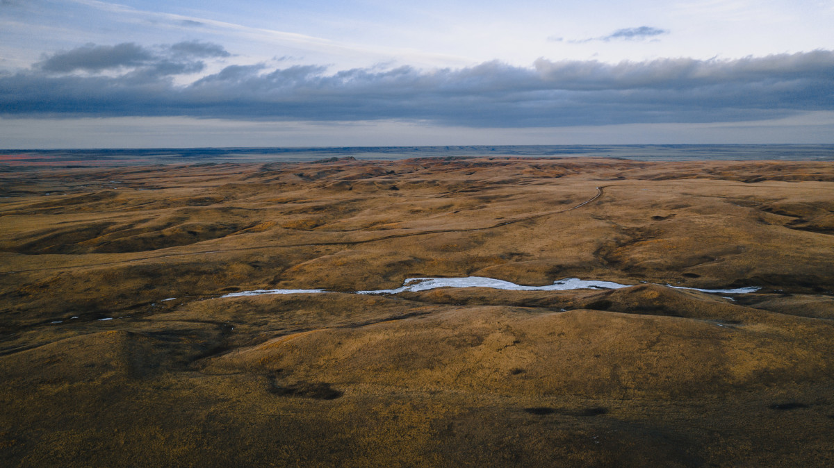 The Fort Peck tribes use this 13,000 acres of prairie to manage their economic herd of bison, first introduced in 1999. (Photo by Jiakai Lou)