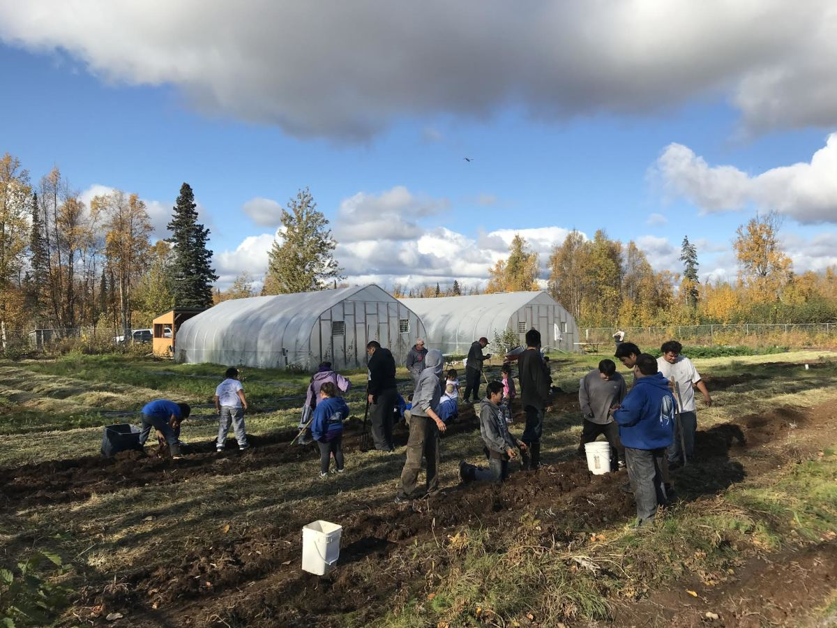 School children help out with the Tyonek community garden. (Photo courtesy of Christy Cincotta.)