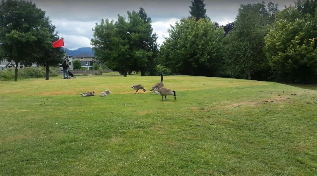 The Coquille Tribe's Bear Creek Golf Course in Medford is adjacent to Bear Creek and is frequented by migratory birds. (Courtesy / Coquille Tribe)