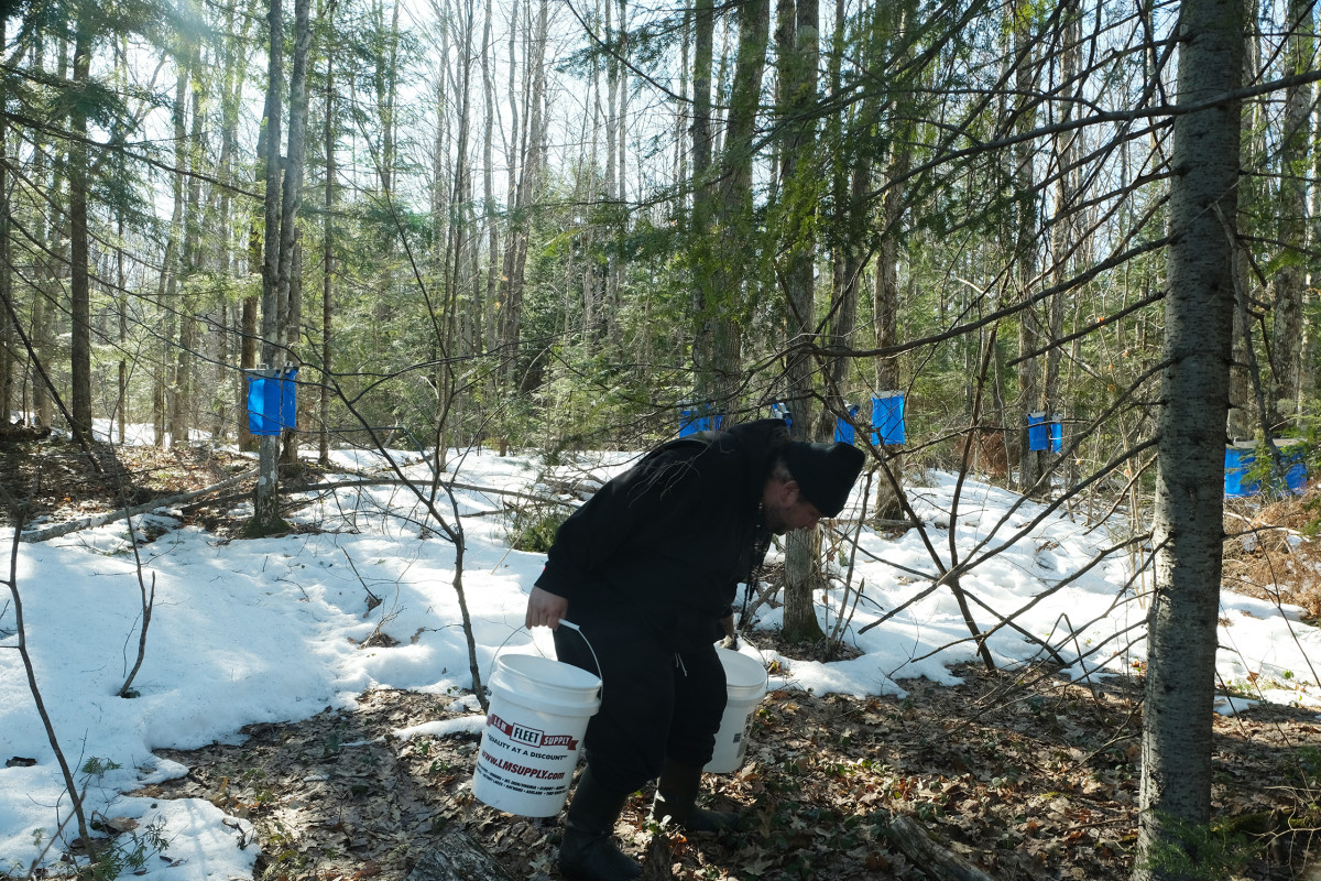 Nate Ante, a member of the Maskiiziibii Youth Services team carries maple sap out of the forest during sugarbush time in March 2021. (Photo by Mary Annette Pember)