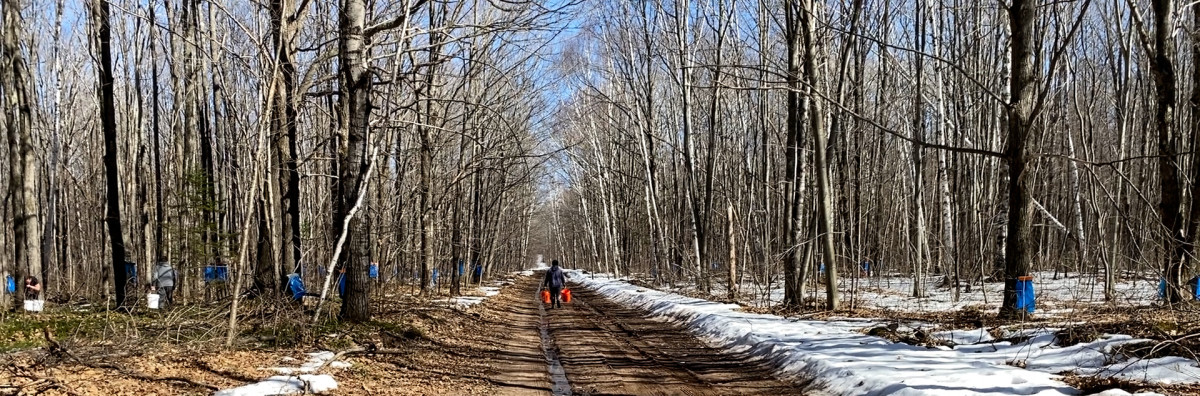 Pierce Maday carries buckets of maple sap to be boiled into syrup on the Bad River Band of Lake Superior Chippewa reservation in Wisconsin during sugarbush time in March 2021. (Photo by Mary Annette Pember)