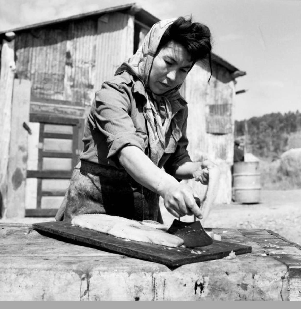 An Alaska Native woman cutting king salmon at the village of Piamute. (Photo courtesy of the Anchorage Museum at Rasmuson Center).