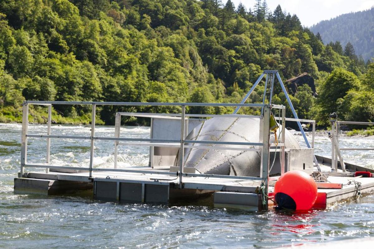 The screw trap at Weitchpec catches juvenile salmon that the Yurok Fisheries Department evaluates to assess the impacts of disease on the population. (Photo by Alex Schwartz/Herald and News)