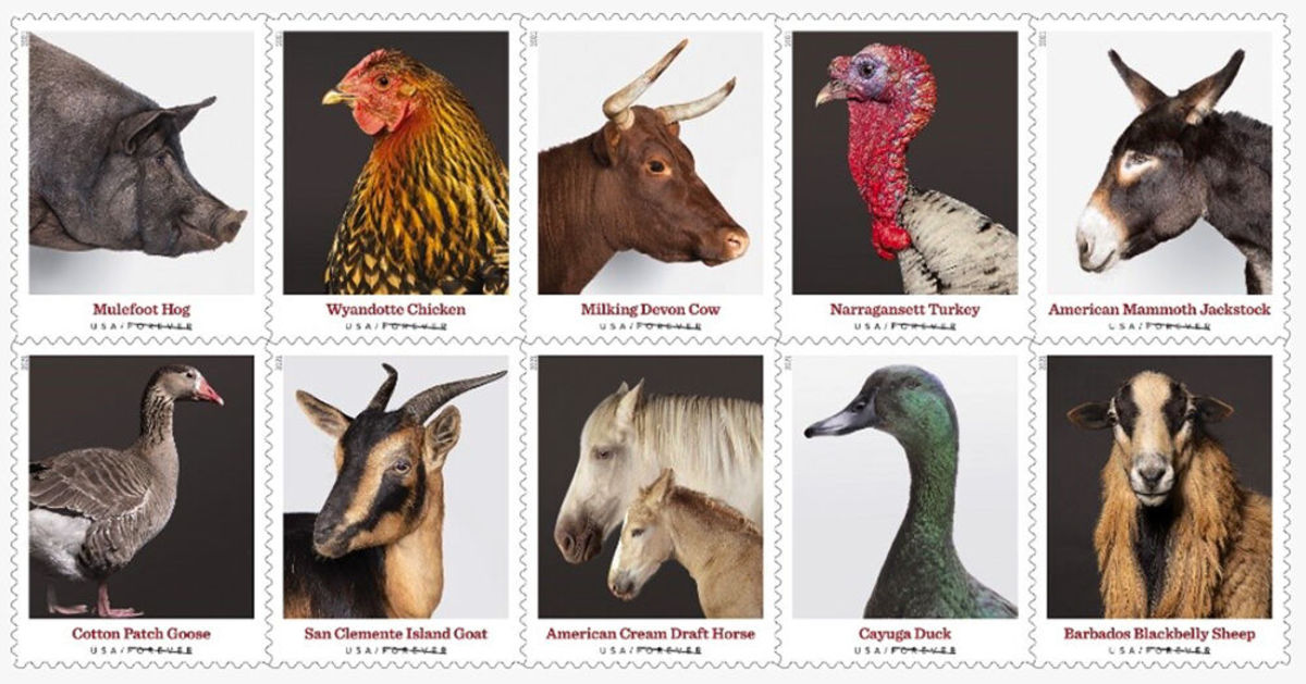 """A new """"forever"""" stamp series features 10 heritage breeds, including Sharpy, an American Mammoth Jackstock donkey originally from Oklahoma. (Photo courtesy via Cherokee Phoenix)"""