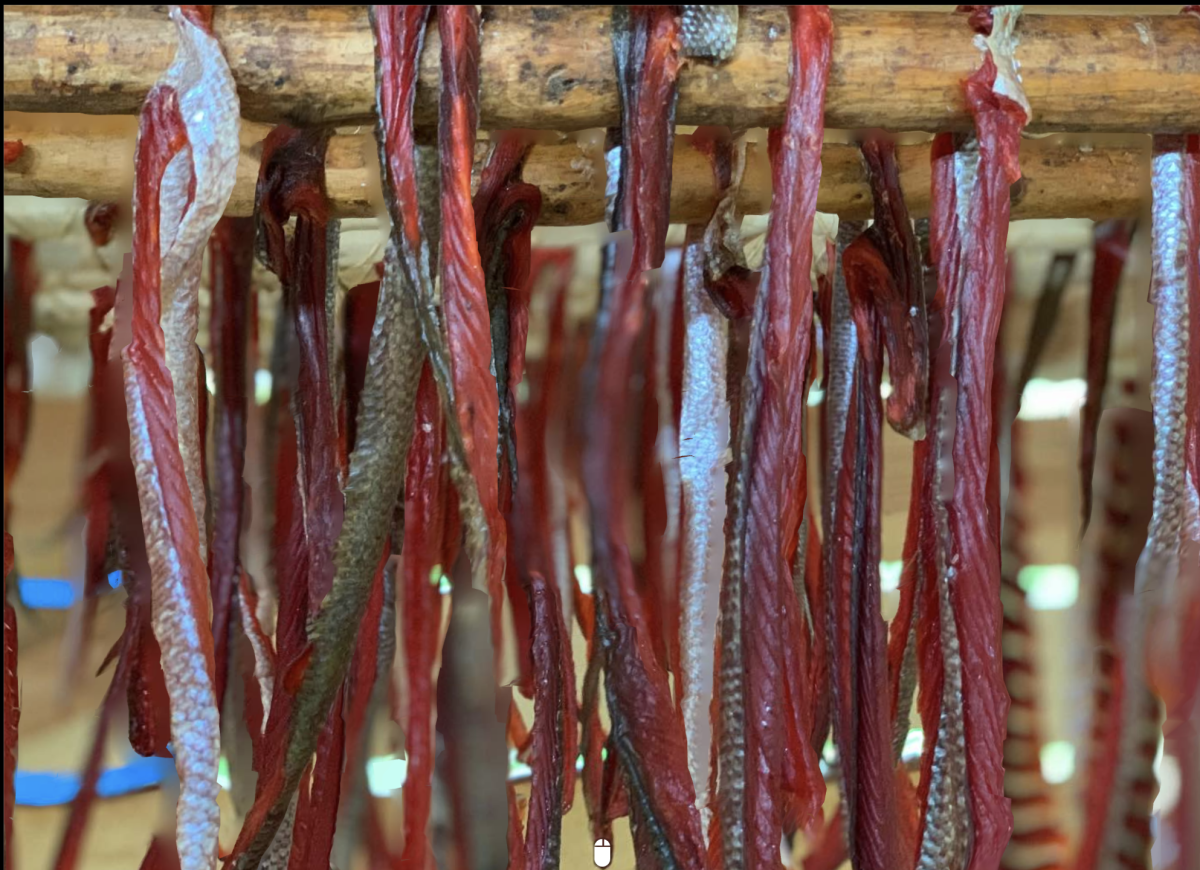 """In 2021, after Evon Peter left a high-level position in academia, he and his family built their """"biggest smokehouse ever,' and spent weeks catching, preparing, and smoking and drying salmon. (Photo by Nanieezh Peter, courtesy of Evon Peter)"""