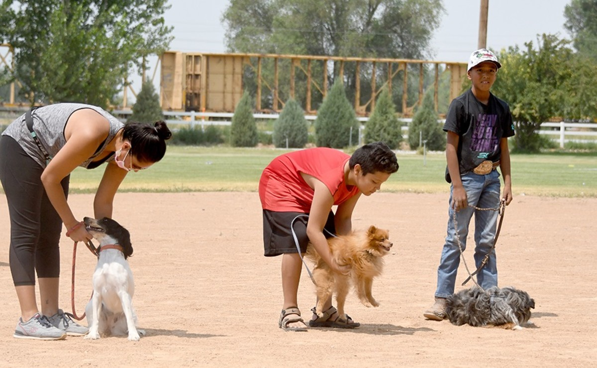 Three contestants vying for Rez Dog of the Year on Friday, July 23, 2021, on the Shoshone-Bannock Tribes' lands at Fort Hall, Idaho, included Blue, far right, an Australian Shepherd shown here with his owner Gator Boyd. Blue disliked his new harness so much he refused to stand and had to be carried around. (Photo by Lori Edmo for Indian Country Today)