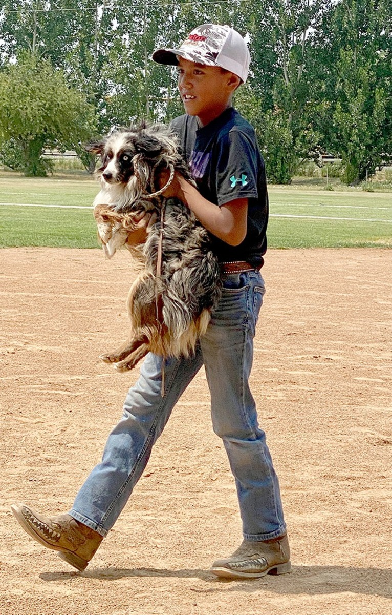 """The winner in the Cutest Rez Dog category was Gator Boyd's Australian Shepherd named """"Blue."""" Blue didn't like his new harness and refused to cooperate, so he had to be carried around. (Photo by Lori Edmo for Indian Country Today)"""