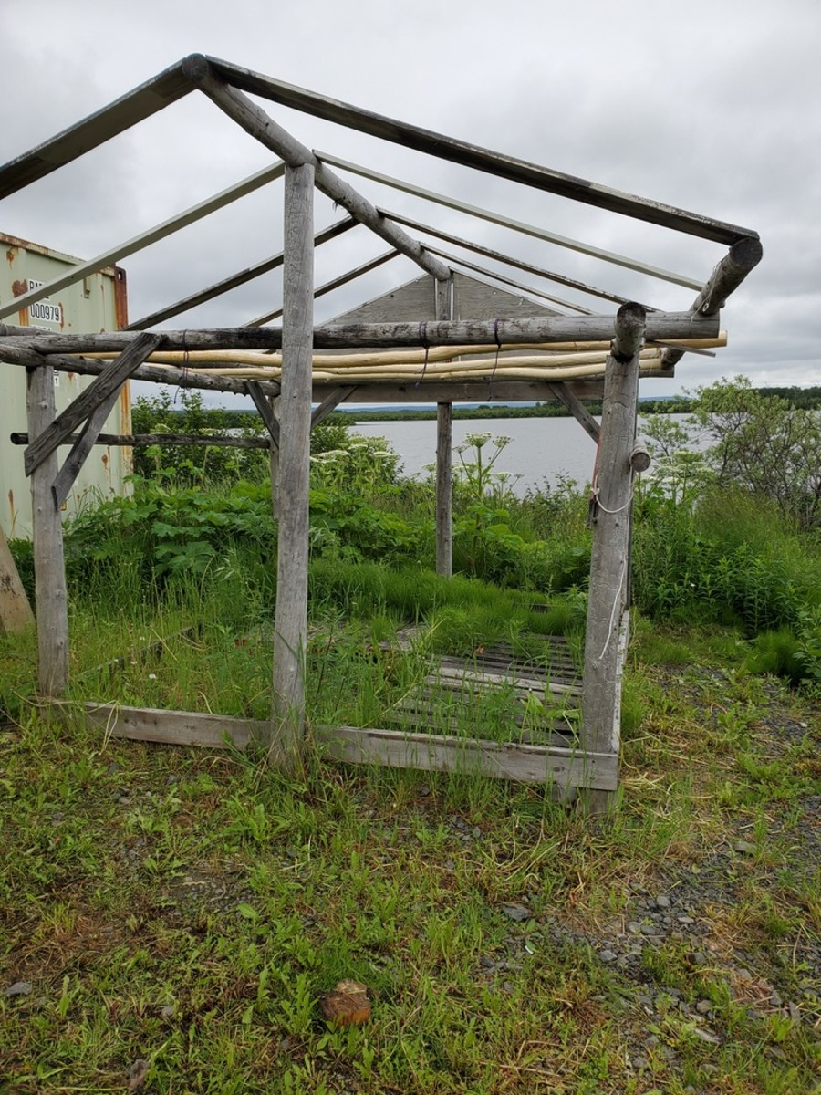 An empty fish rack in St. Marys, a village on the Yukon River, at a time of year when it would normally be packed with salmon fillets getting smoked or dried for preservation (Photo by Serena Fitka, Yukon River Drainage Fisheries Association). 2021